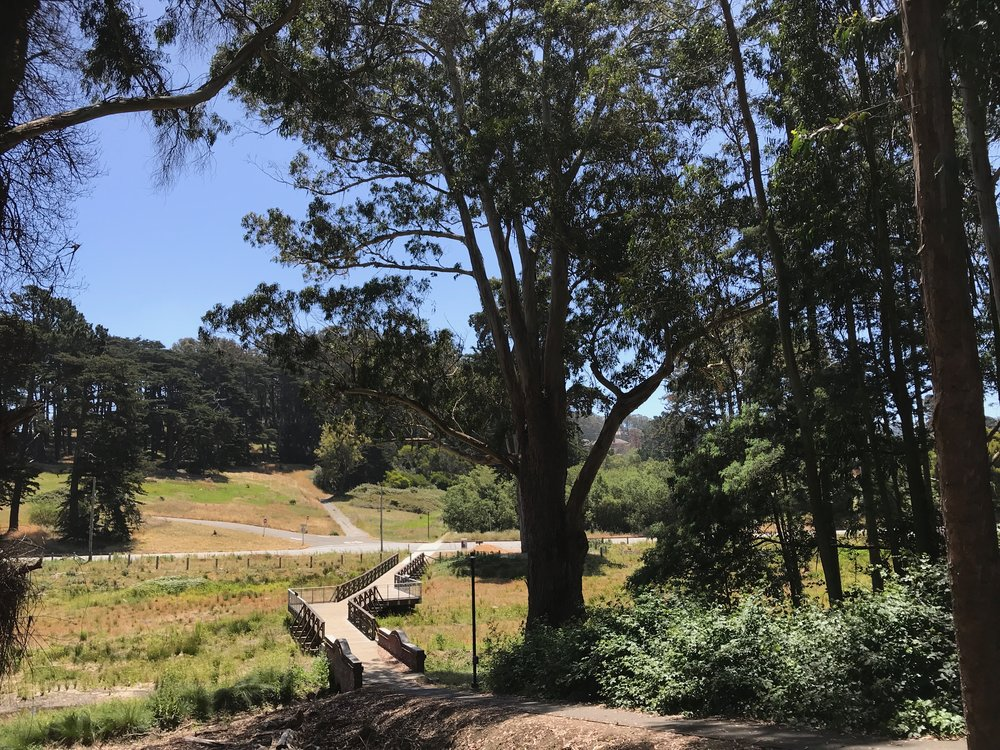 Macarthur meadow BWALK - 13.jpg