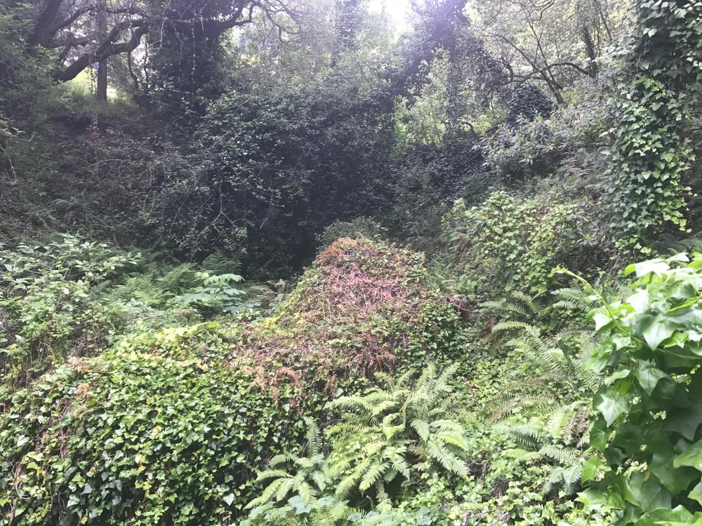 Before- Ivy infestation, Boulders and waterfall convered.