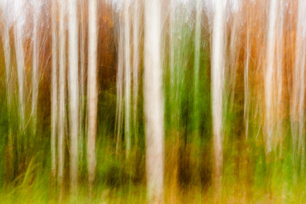 Treelines