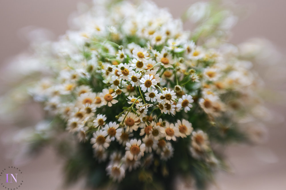 Lensbaby Sweet 50  - SS 1/100 - f4.0 - ISO 640