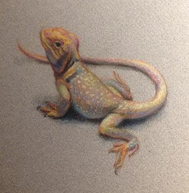 collared lizard pastel web.jpg