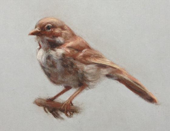 10 sage sparrow.jpg