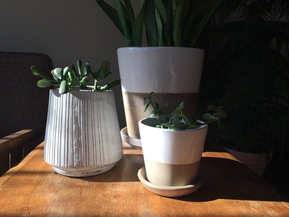 A collection of grey and white terracotta pots in my sunroom (the two tone ones are from Crate & Barrel -  similar .)