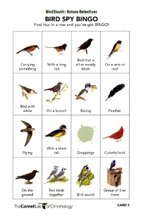 Bird Spy Bingo!