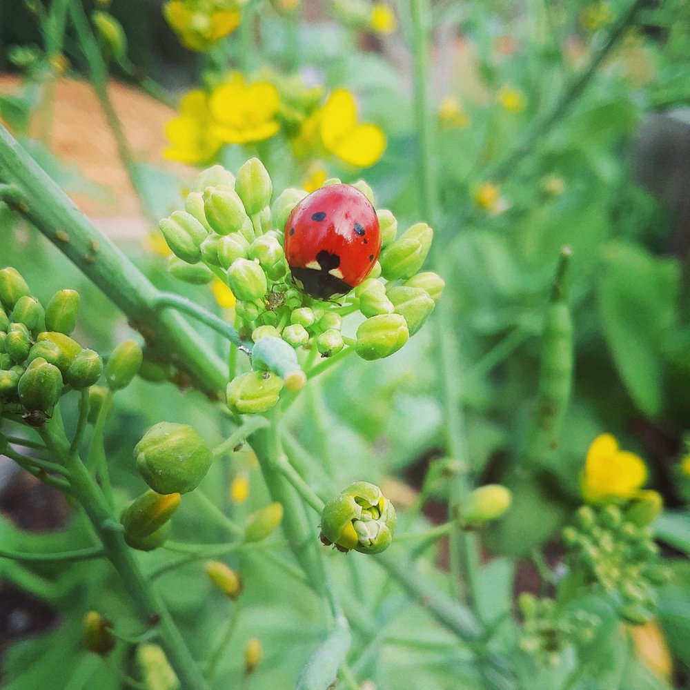 Beneficial insects will help you with the undesireables