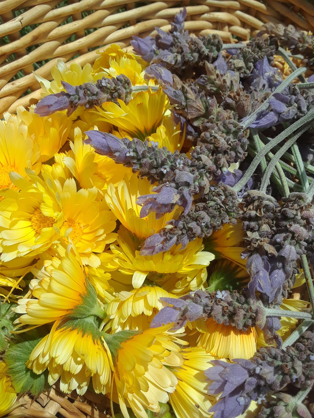 Calendula and lavender
