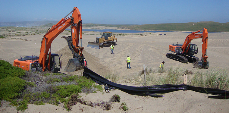 Excavators and bulldozers unearthed invasive beachgrass from sand dunes at Point Reyes National Seashore in 2010. The removal has resulted in a large and lasting reduction in seed predation pressure for a native coastal lupine (Photo: Eleanor Pardini/Washington University).