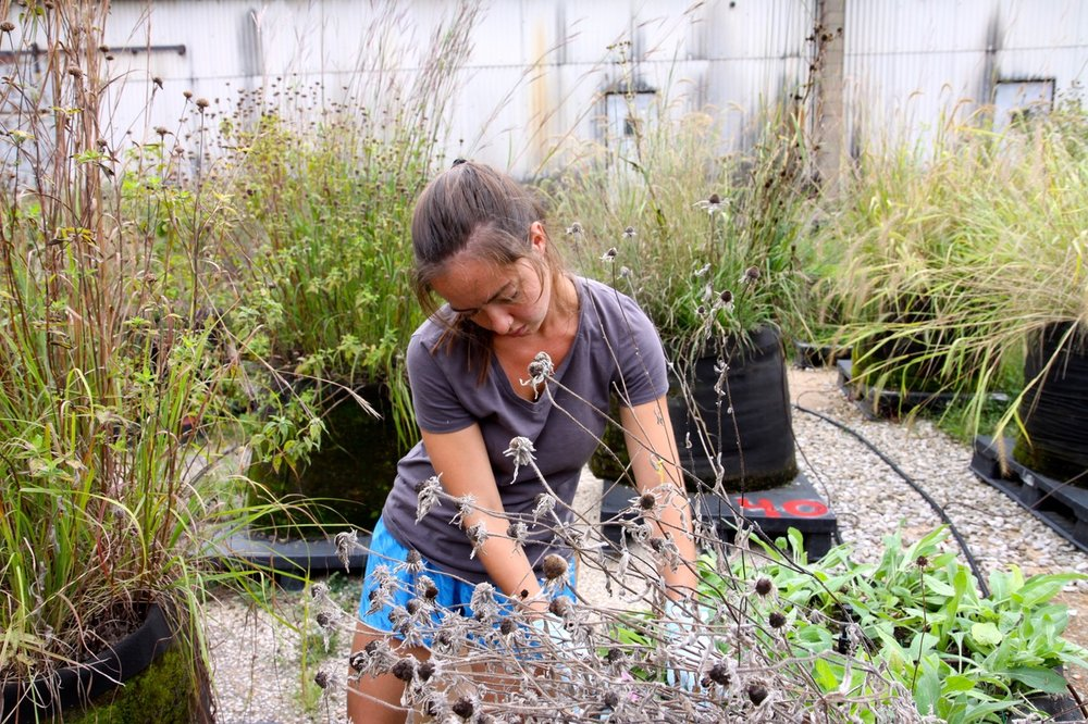 """Erin Carroll conducting research in prairie mesocosms on """"Soil respiration in native tallgrass prairies under climate change: the role of above and belowground diversity"""""""