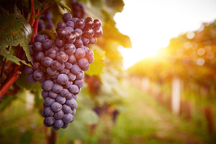 Lodi - Lodi Wine Tour Limo Service