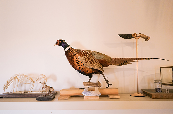 PreyTaxidermy6