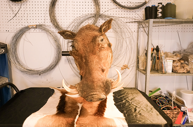 PreyTaxidermy7