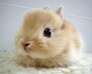 This article just got really depressing, so here's a cute bunny to cheer you up.