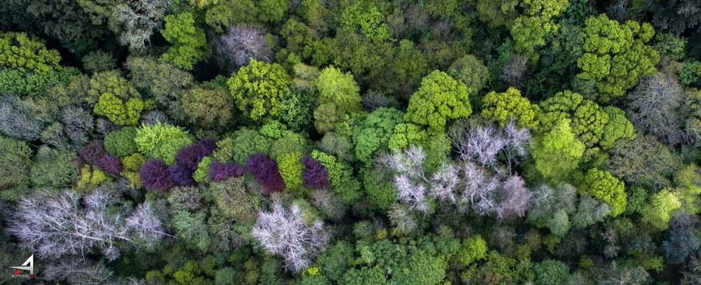 A58 trees-1-2.JPG