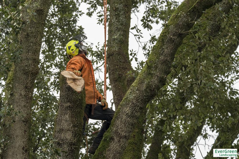 EVERGREEN TREE SURGERY TAWSTOCKALTITUDE58 (1 of 36).jpg
