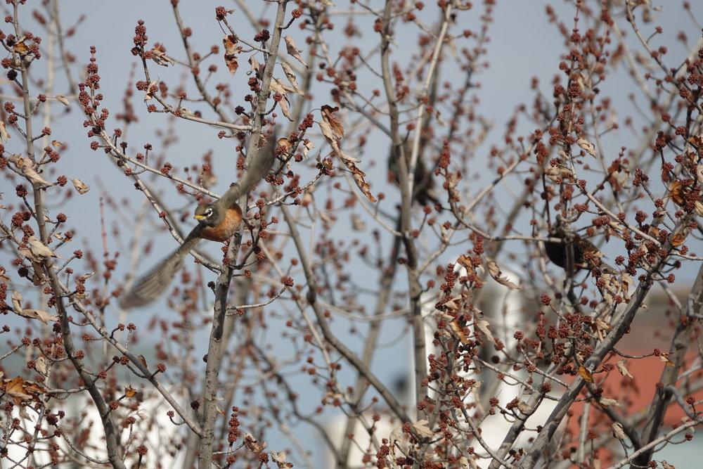 glevinson_birds.JPG
