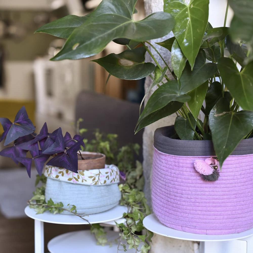 plantes-cache-pots