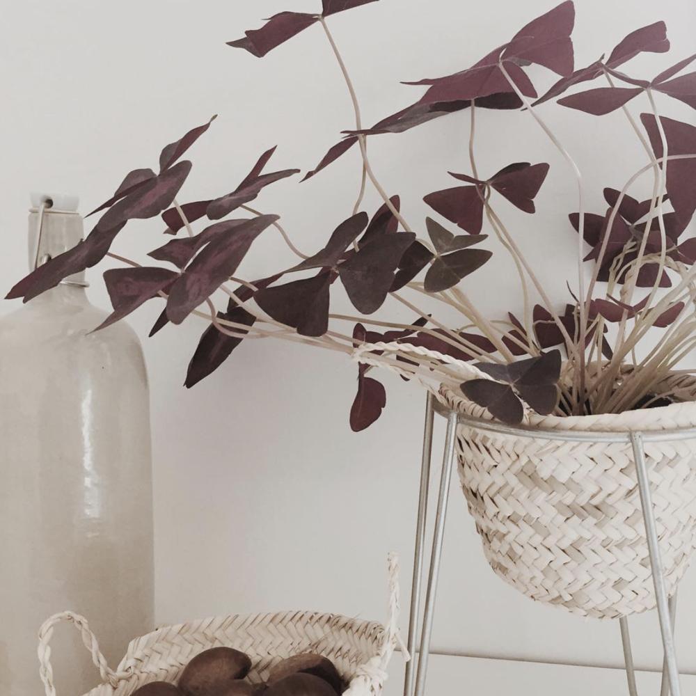Des plantes, toujours des plantes