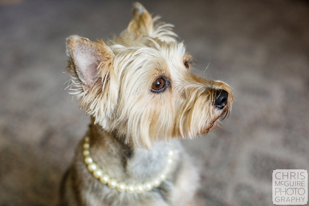 dog wearing pearl necklace