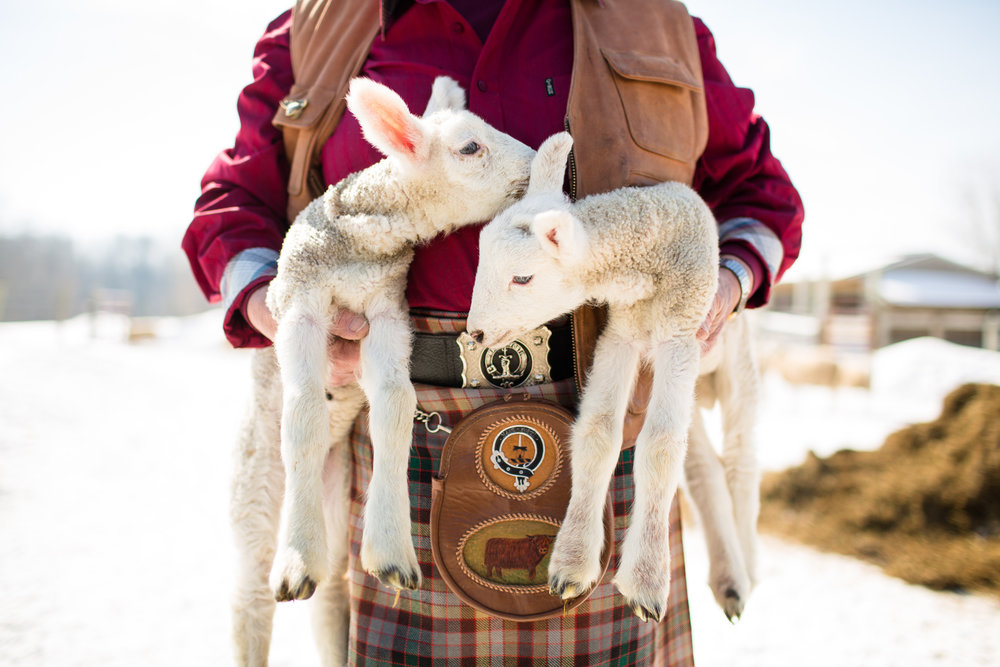 farmer with lambs