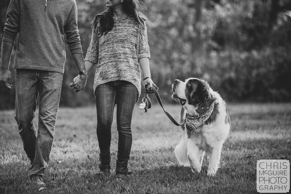 engagement portrait st bernard looking at couple