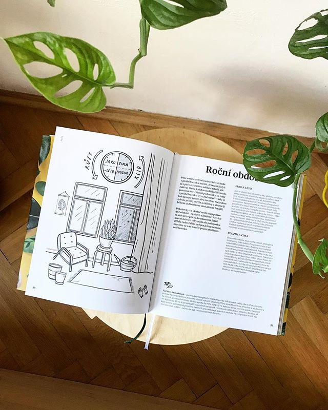 Pokojovky a ročné obdobia. Áno, aj tomu sa venujeme v našej knižke. 🌿 Za ilustráciu ďakujeme @karolinastrykova #knihapokojovky