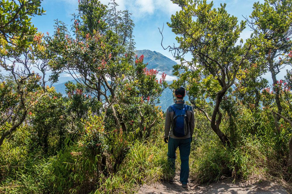 At the foot of Merapi it is getting greener again