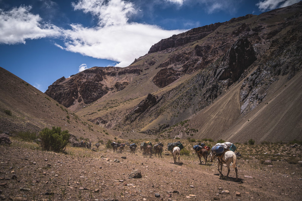 The mules pass us with the heavy load of our luggage