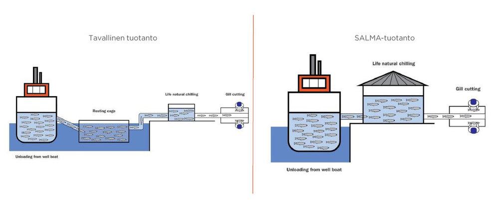 Oikeanpuoleisessa kuvassa kuvattuna SALMA-tuotannossa käytettävä Live cold -menetelmä.