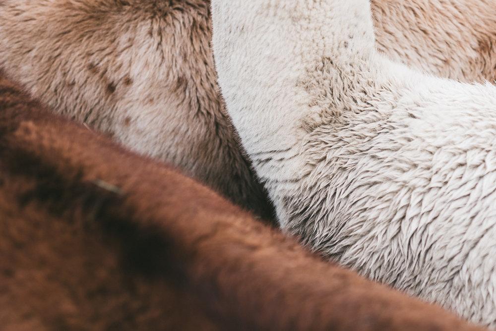 Natur Nuancen - Wollweiss, Karamell- oder Silberbeige über Graubraun, Rotbraun bis Tiefschwarz. Jedes der Lama Leibacher ist einzigartig, so auch die fein-flauschige Naturwolle.