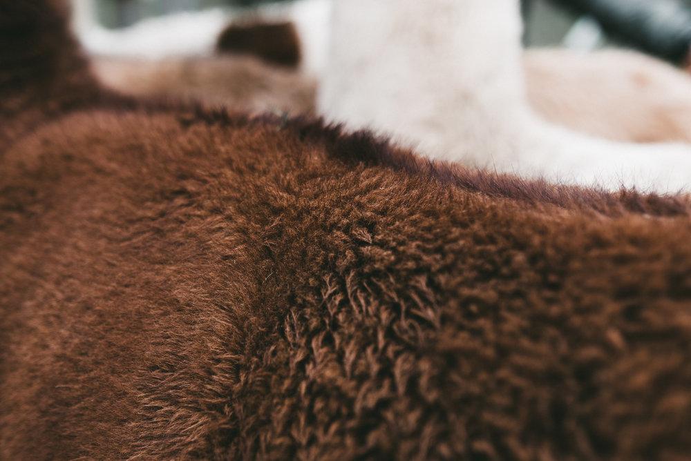 Pflegen und hegen. - Damit dein Lama-Stirnband oder deine Lama-Mütze ein Leben lang hält, pflege und hege es: Lüfte es immer mal wieder an einem geschützten Plätzli an der frischen Luft aus. Wasche es, wenn nötig, bei sanftem Wollwaschgang mit natürlichem Waschmittel. Denn Naturprodukt braucht Natur. Die pflanzengefärbten Unikate nicht an der Sonne aufbewahren, da sonst die Farbe über die Jahre verblassen könnte. Auch dann kann es einfach wieder nachgefärbt werden. Ob von dir selbst oder von uns. Jedoch wird jede Pflanzenfärbung einmalig und ist nicht immer identisch mit der vorherigen Farbnuance. Wenn irgendetwas sein sollte mit deinem Unikat, melde dich gern bei mir. Mir ist es wichtig, dass du es mit Freude trägst. Ein Leben lang. Kontakt