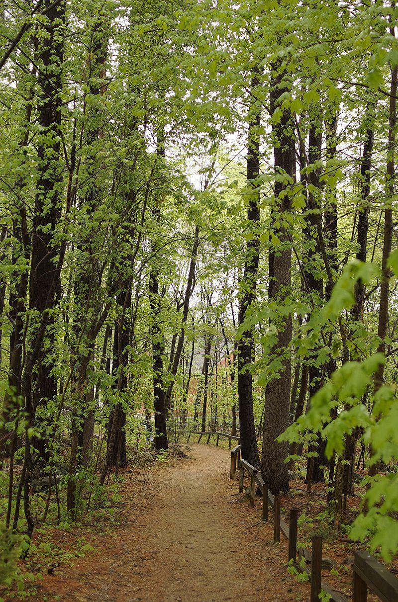 800px-Carlisle_MA_forest_path.jpg