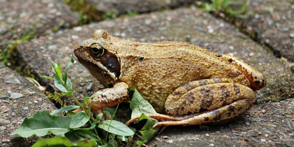 amphibian-animal-close-up-162252.jpg