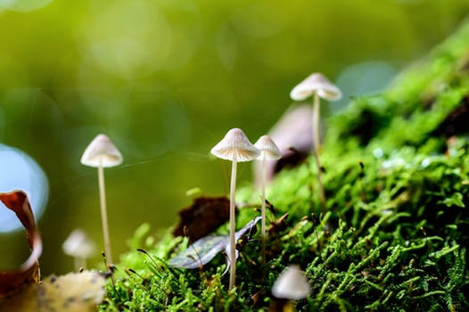 tiny mushrooms and moss.jpeg