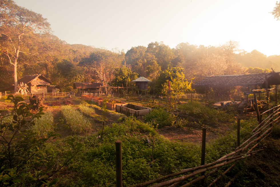 garden in Chiang Mai mountains