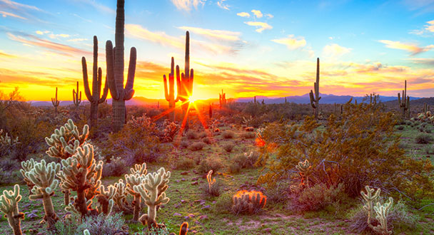 Tucson, Arizona | US Road Trip | My Dream Vacation | Nature Lovers | Travel Blog | Ashley Rae Co