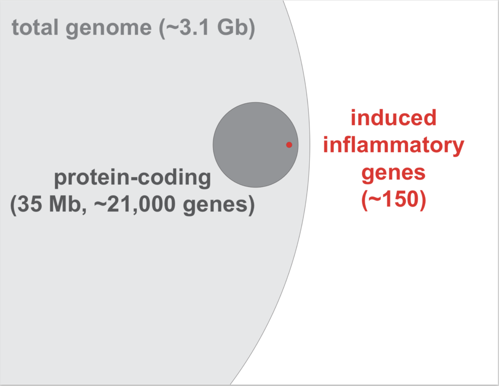 A Needle in the 3.1 Gb Genome.  Proportionate representation of induced inflammatory genes that are rapidly and robustly induced following macrophage sensing of bacterial components for host defense.