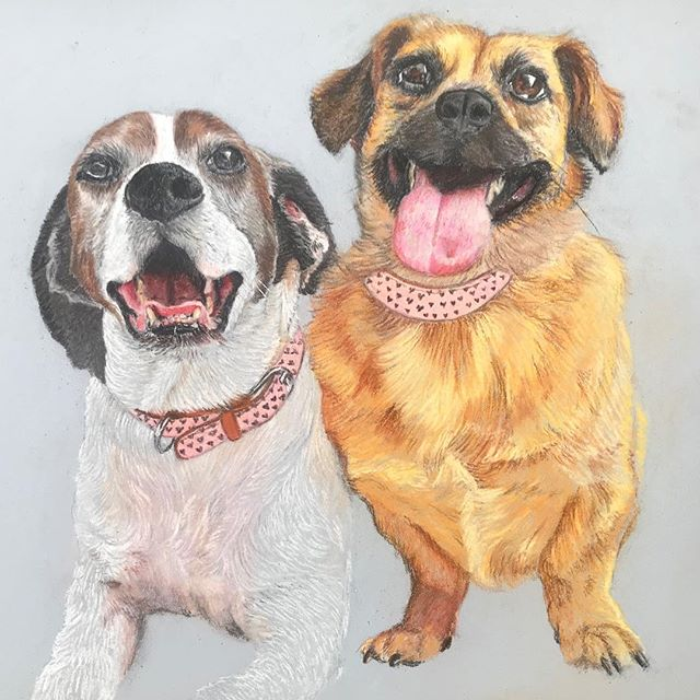 As I mentioned, I am catching up on work OR things that I had done but never posted. Here's a #dogportrait of LuLu and Sugar Britches :) There are many things I don't normally do in this portrait that really stretched my comfort level. This helps me grow so much as an artist! #dog #dogportrait #pastel #pastels #pastelpencils #conteaparis #twopeasinapod #mansbestfriend