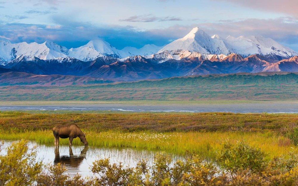 denali-national-park-alaska-AKROUTE0417.jpg