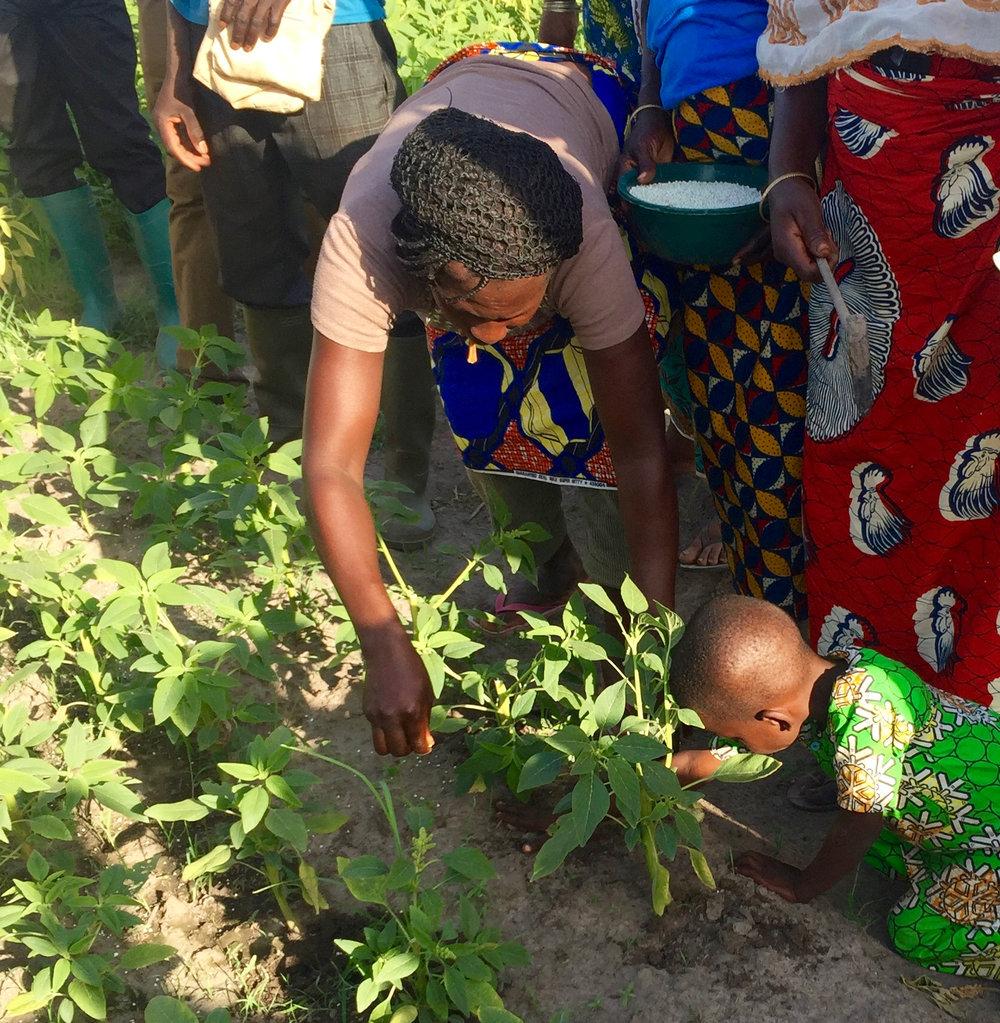 microdosing-fertilizer-west-africa.jpg