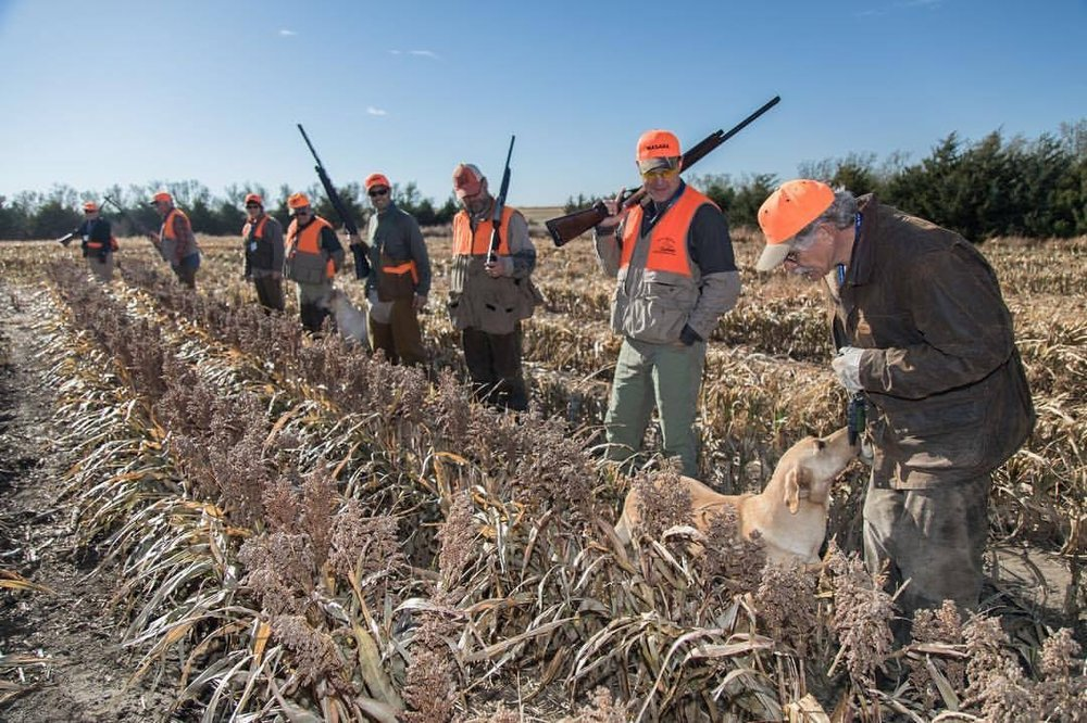 6 pheasant hunters standing in a row of milo watching the pheasant hunt guide interacting with yellow labrador retriever
