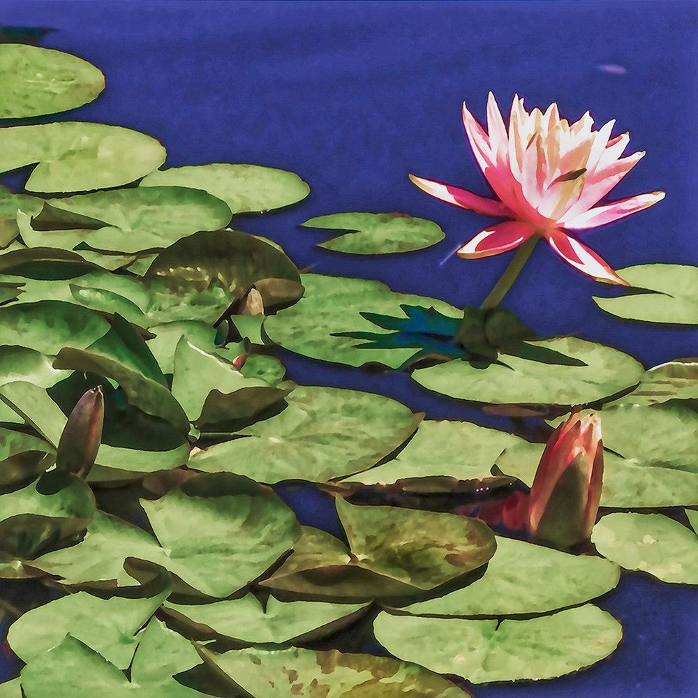 Water Lily 147_HDR_Bota01niK copy.jpg