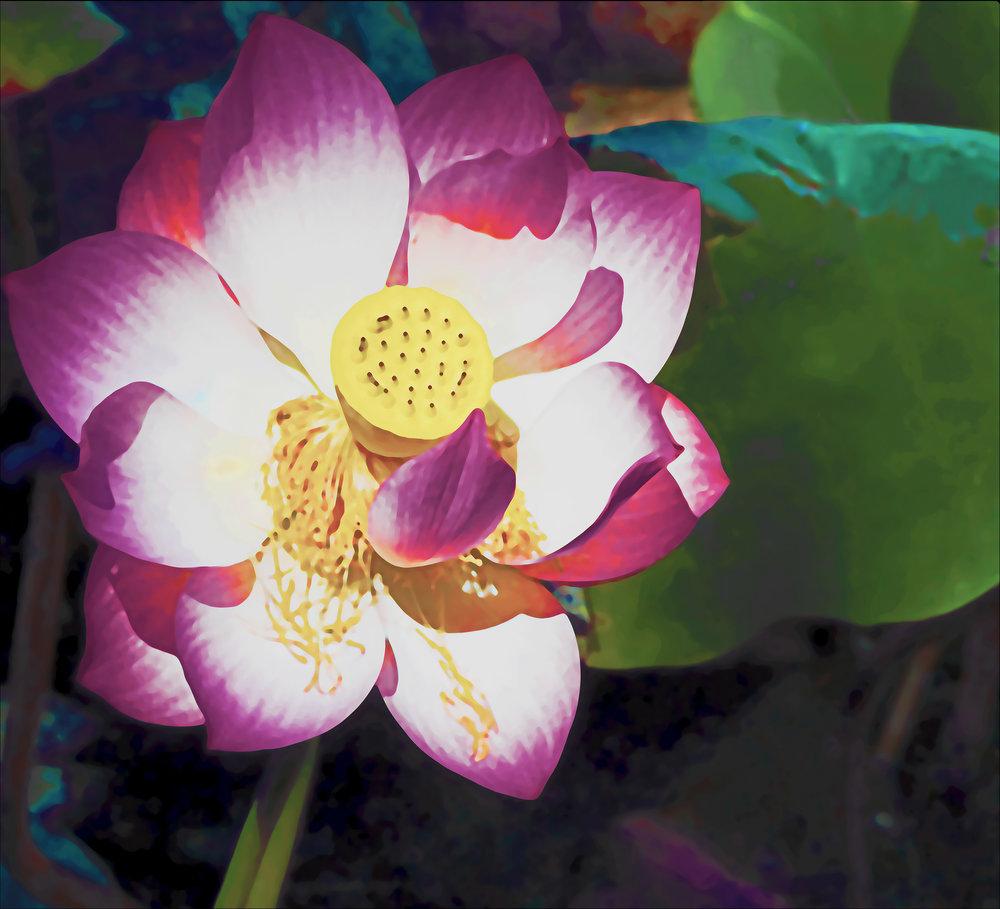 Lotus Flattened (01)