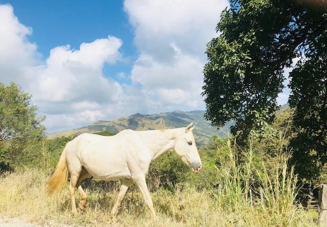 Costa Rica 4.jpg