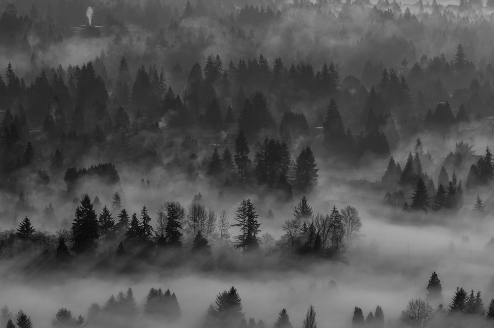 From a mountain in Burnaby the fog drifts through the trees below. Photo: Kristine Nyborg / www.wildblueberryphotography.com