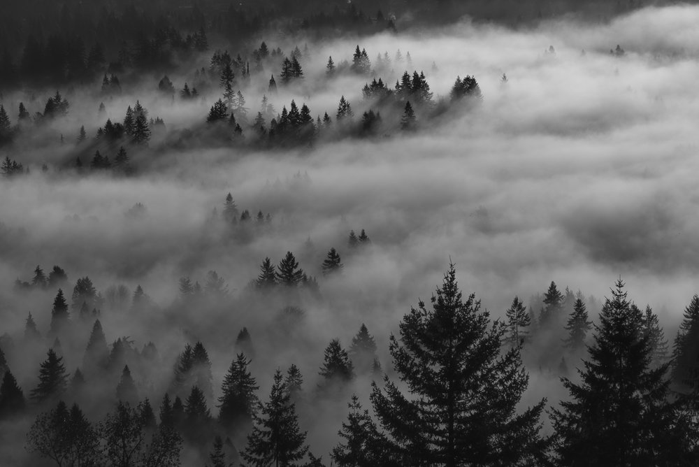 The forest gets covered with fog outside Vancouver, British Columbia. Photograph by Kristine Nyborg / www.wildblueberryphotography.com