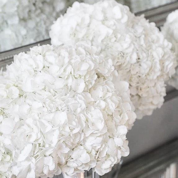 'Tis the season for snowy whites ✨#hydrangeas #withheart #cœur