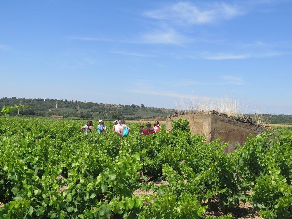 Vinos y Búnkers del Emporda - Rutas guiadas sobre historia y cata de vinos locales para descubrir los búnkers de la post-guerra y la tradición vinícola de la zona