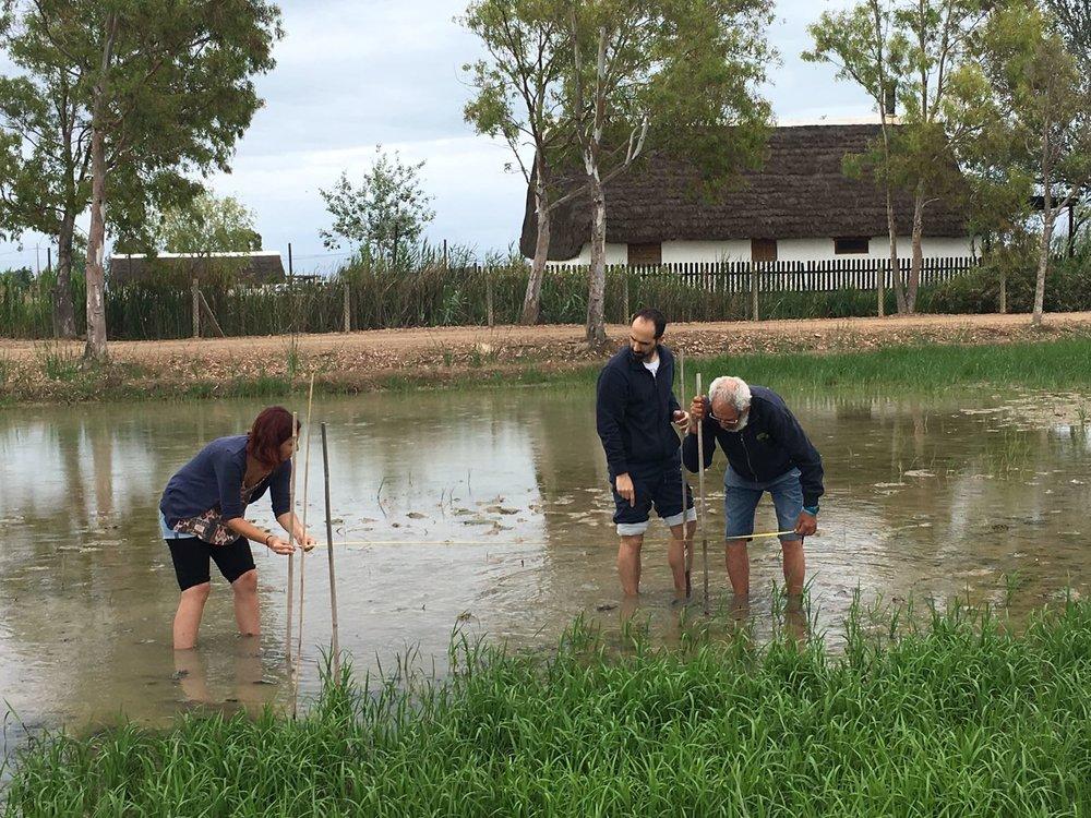 Safari eco-sostenible por el Delta del Ebro - Visita la zona del Delta del Ebro para conocer la fauna autóctona, aprender como se conrea el arroz actualmente y como se hacía antes, visitarás productores locales y la zona del parque natural...