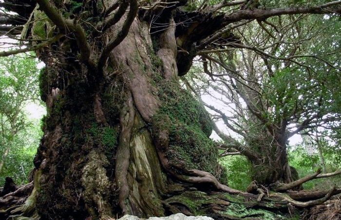Baños de bosque y experiencias terapéuticas en la naturaleza - Inmersión en un bosque singular o maduro para experimentar con los 5 sentidos, conectar con la naturaleza y descubrir todas las propiedades terapéuticas que esconden los bosques
