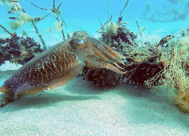 Descubre sepieras visitables en la Costa Brava - Experiencia única con un proyecto de conservación de especies marinas, desarrollo de la economía local y fomento del turismo sostenible y de proximidad